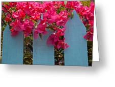 Fence With Bouganvillia Greeting Card