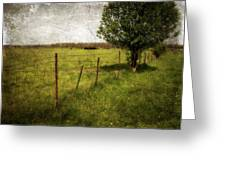 Fence With Tree Greeting Card
