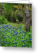 Fenced In Bluebonnets Greeting Card