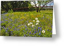 Fenceline Wildflowers Greeting Card