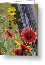 Fenceline Wildflowers Greeting Card
