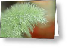 Fennel Plant Greeting Card