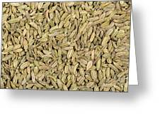 Fennel Seeds Greeting Card