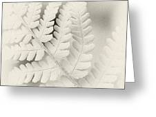 Fern Leaf Greeting Card