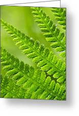 Fern Abstract Greeting Card
