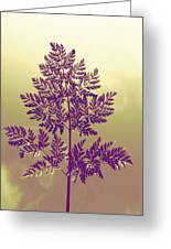 Fern Greeting Card by Andrea Dale