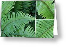 Fern Collage Greeting Card