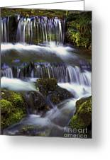 Fern Falls - 31 Greeting Card