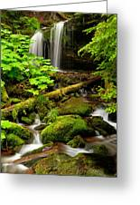Fern Falls Panoramic Greeting Card