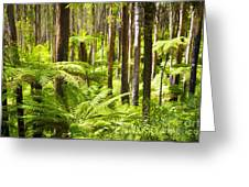 Fern Forest Greeting Card