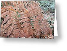 Fern Frond Frosted Greeting Card