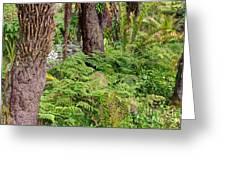 Fern Garden Greeting Card
