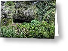 Fern Grotto Greeting Card