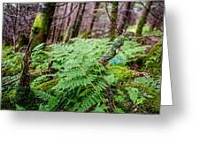 Fern In Forest Greeting Card