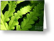 Fern In Sunlight Greeting Card by Sandra Cunningham