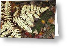 Fern In The Forest Greeting Card