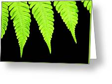 Fern Isolated On Black Background Greeting Card
