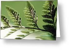 Fern Seeds Greeting Card