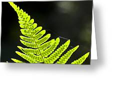 Fern Tip Greeting Card