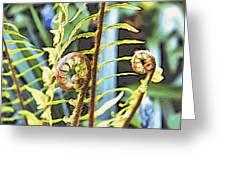 Fern Twirls Greeting Card