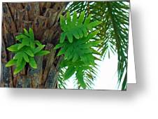 Ferns 1 Greeting Card
