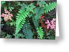 Ferns Along The Columbia River Greeting Card