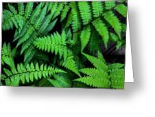Ferns Along The River Greeting Card