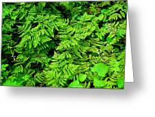 Ferns And Fauna Greeting Card by T C Brown
