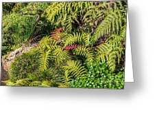 Ferns And More Greeting Card