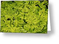 1m2436-ferns At The Base Of Mt. Robson  Greeting Card