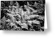 Ferns Baton Rouge La Infrared Dsc04475 Greeting Card