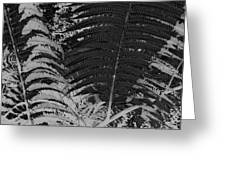 Ferns Greeting Card by Colleen Cannon