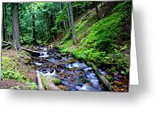 Ferns Dancing By The Creek Greeting Card