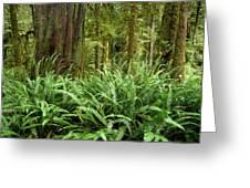 1a2912-ferns In Rain Forest Canada  Greeting Card