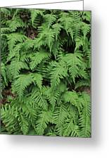D3b6333-ferns In Sonoma 2  Greeting Card