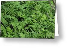 D3b6327-ferns In Sonoma Greeting Card
