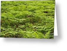 Ferns In Summer Greeting Card