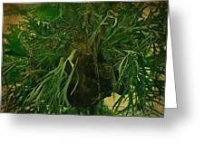 Ferns In The Jungle Room Greeting Card