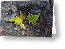 Ferns In Volcanic Rock Greeting Card