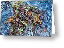 Ferns On Cliffside Greeting Card