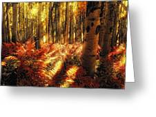 Ferns On The Forest Floor Greeting Card