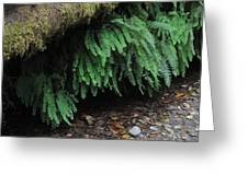 Ferns Over Home Creek Fern Canyon Greeting Card