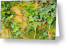 Ferns Vines And Lines 2am-112099 Greeting Card