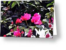 Fernwood Botanical Garden Bougainvillea Niles Michigan Usa Greeting Card