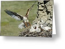Ferruginous Hawk And Chicks Greeting Card
