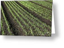 Fertile Farmland Greeting Card
