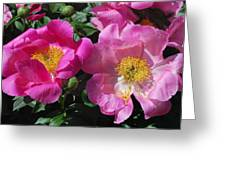 Festival Of Pink Greeting Card