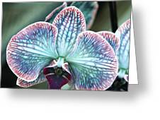Festive Orchid Greeting Card