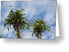 Ficus Leaves Against The Sky Greeting Card