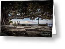 Ficus Magnonioide In The Alameda De Apodaca Cadiz Spain Greeting Card